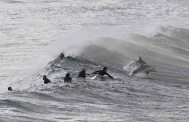SURFERS AND DOLPHINS