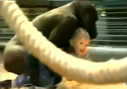 Toddler_with_gorilla