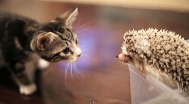 Kitty and Hedgehog