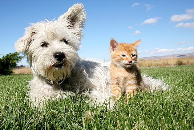 Dogs And Cats Playing Together Dogs And Cats Playing Dogs vs