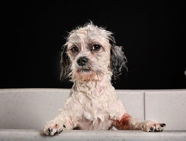 Dog Wash a Thon