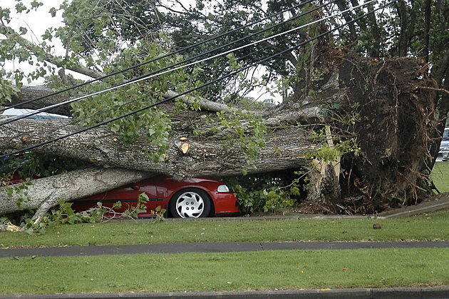 Car Crushed by Tree