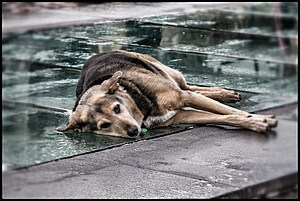 Street Dogs Of Athens